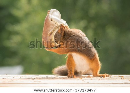 close up of red squirrel with shoes