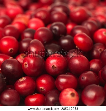 Close up of ripe cranberries, selective focus, square image - stock photo