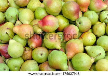 close-up of ripe organic pears after harvesting - stock photo