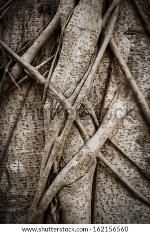 Close-up of roots tree - stock photo