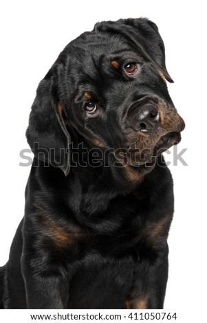 Close-up of Rottweiler puppy isolated on white background - stock photo