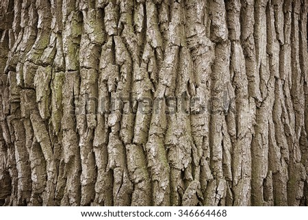 Close up of rough, and aging dry bark on an old tree trunk background - stock photo