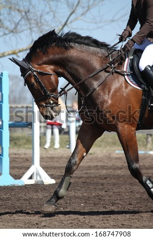 Close up of running sport horse during show - stock photo