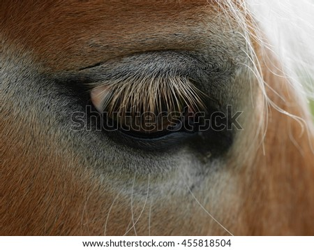 Close-up of sad horse's eye - stock photo