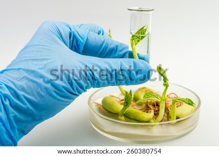 Close up of scientist hand holding tube with leaf on laboratory - stock photo
