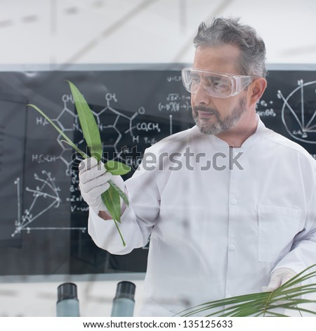 close-up of scientist in a chemistry lab analyzing leafs around lab tools and with a blackboard with formulas on the background