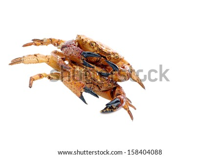Close up of seafood red crab. - stock photo