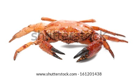 Close up of seafood red crab. Isolated on a white background. - stock photo