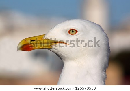 Close-up of seagull - stock photo