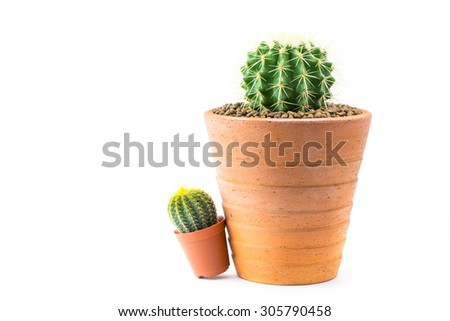 Close up of shaped cactus with long thorns on clay pots white background. - stock photo