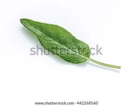 Close Up of single fresh sage leaves isolated on white background . Alternative medicine fresh salvia officinalis. - stock photo