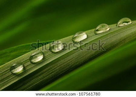 Close-up of six drops of water on a green leaf - stock photo