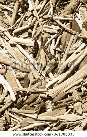 close up  of small driftwood sticks on a surf beach, Waikanae Beach, Gisborne, East Coast, North Island, New Zealand