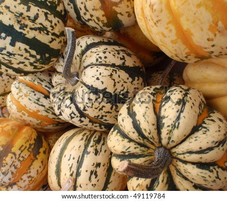 Close up of small funky colored organic pumpkins at a farmers market in San Francisco.