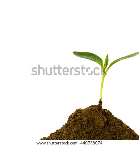 Close-up of small green young plant growing up from black heap soil over isolated white background. Green spout for save and safe conservation environment. Organic growing and clean ecosystem concept. - stock photo