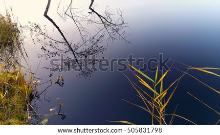 Close up of smooth forest bog pond surface reflecting trees and blue sky with setting sun. Details with autumn leaves, reeds, grass and moss on shore. Rural nature reserve in Finland, Northern Europe