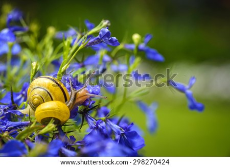 Close up of snail on blue lobelia flower in garden - stock photo