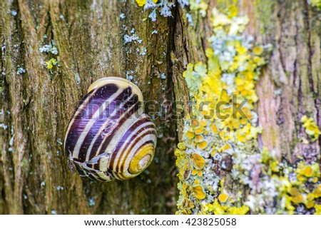close up of snail on old tree with lichen - stock photo