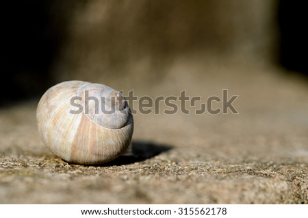 Close up of snail shell. Extremely shallow DOF. - stock photo