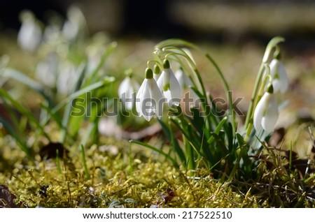 Anuales de invierno - Garden.org