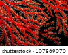 close up of soft coral - stock photo
