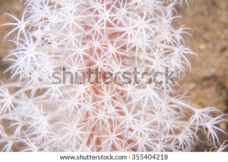 Close up of soft coral on a tropical coral reef. - stock photo