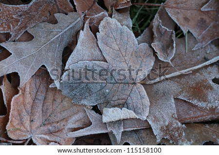 Close-up of some leave in the ground - stock photo