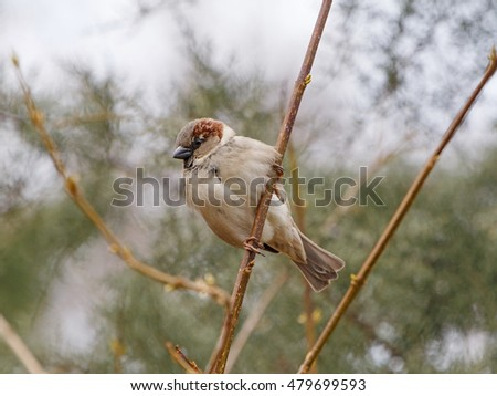 close up of sparrow sitting on branch