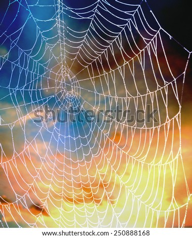 Close up of spider web against sky - stock photo