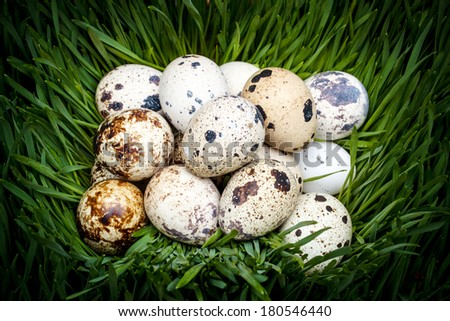 Close-up of spotted quail eggs in green grass nest