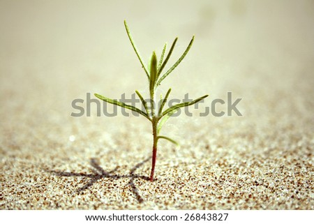 close-up of sprout coming out of the sand on the beach. The begining of new live. - stock photo