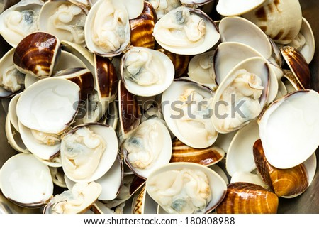 Close-up of steamed clams  - stock photo