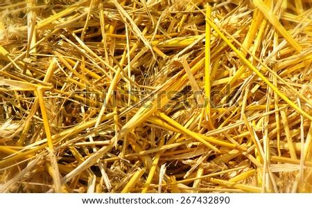 Close up of straw background texture - stock photo