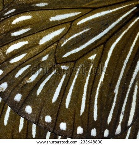 Close up of Stripe Blue Crow butterfly's wing texture for brown and white background - stock photo