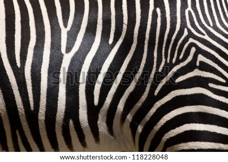Close-up of stripes on zebra fur - stock photo