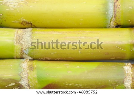 Close up of sugar cane background