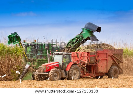 Close-up of sugar cane harvesting in Queensland, Australia. - stock photo