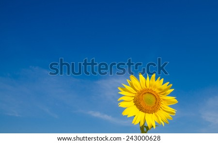 Close-up of sunflowers against a blue sky on field