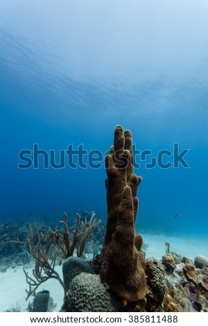 Close-up of tall stalk of tube sponge, Cero, on coral reef in Caribbean - stock photo