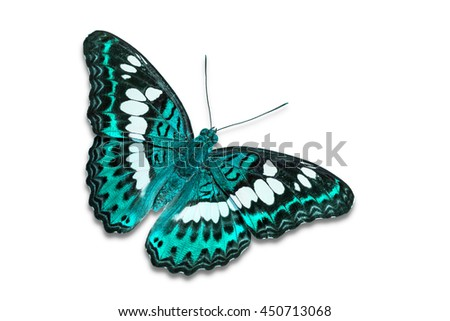 Close up of teal color Commander (Moduza procris) butterfly, isolated on white background with clipping path, dorsal view - stock photo