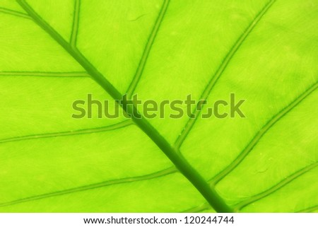 Close up of textured green leaves