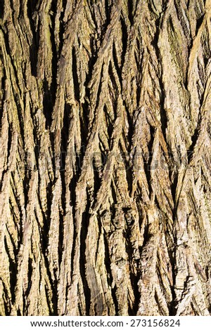 Close up of the bark of an old oak tree with sunlight on it - stock photo