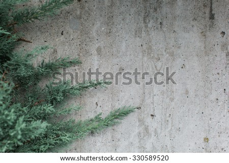 Close up of the branches and foliage of an evergreen conifer against a textured grey exterior wall with copyspace in horizontal format - stock photo