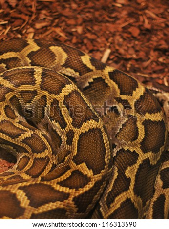 Close up of the bright, big and colorful anaconda snake - stock photo