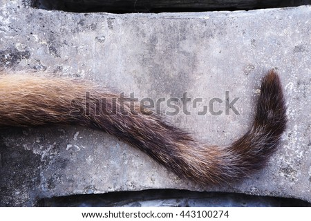 Close up of the cat tail on concrete background - stock photo