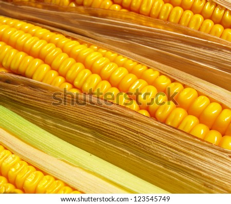 close up of the corn
