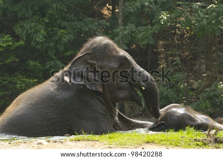 Close up of the elephant relaxing in a zoo pool - stock photo