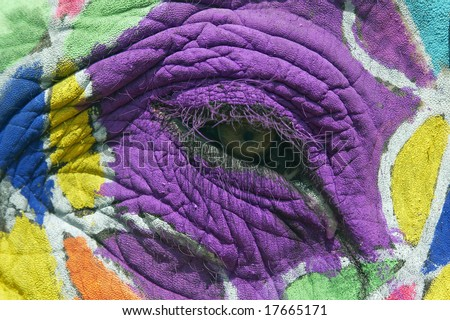 Close up of the eye of a decorated elephant at the annual elephant festival in Jaipur, India - stock photo