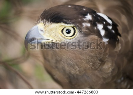 Close-up of the face of a  Falcon, selective focus - stock photo
