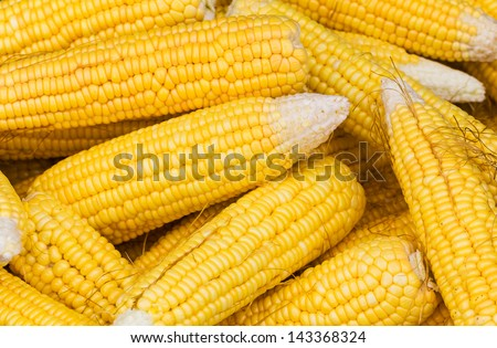 close up of the fresh corn cobs